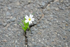 Mindfulness_Resilience-MindfulHappiness