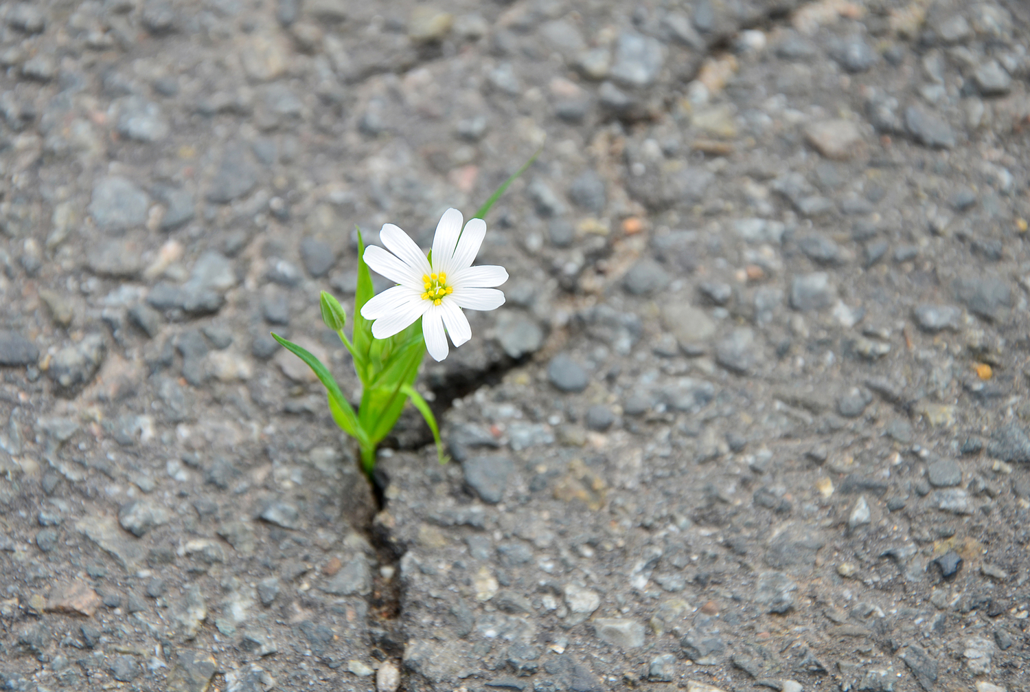 Personal Suffering |Emotional Resilience | Mindful Happiness
