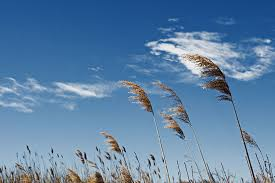 the wind_mindfulhappiness