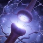neurotransmitter_MindfulHappiness