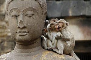 mindfulhappiness-meditation-monkey-mind
